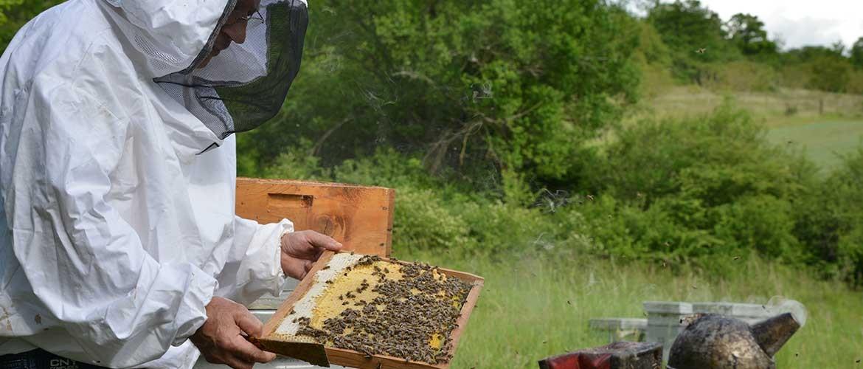 Rucher de Fontenay, producteur de miel, hydromel, pain d'épices