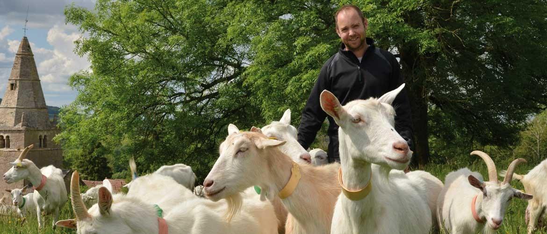 Chèvrerie de Blancey, producteur de fromage de chèvre